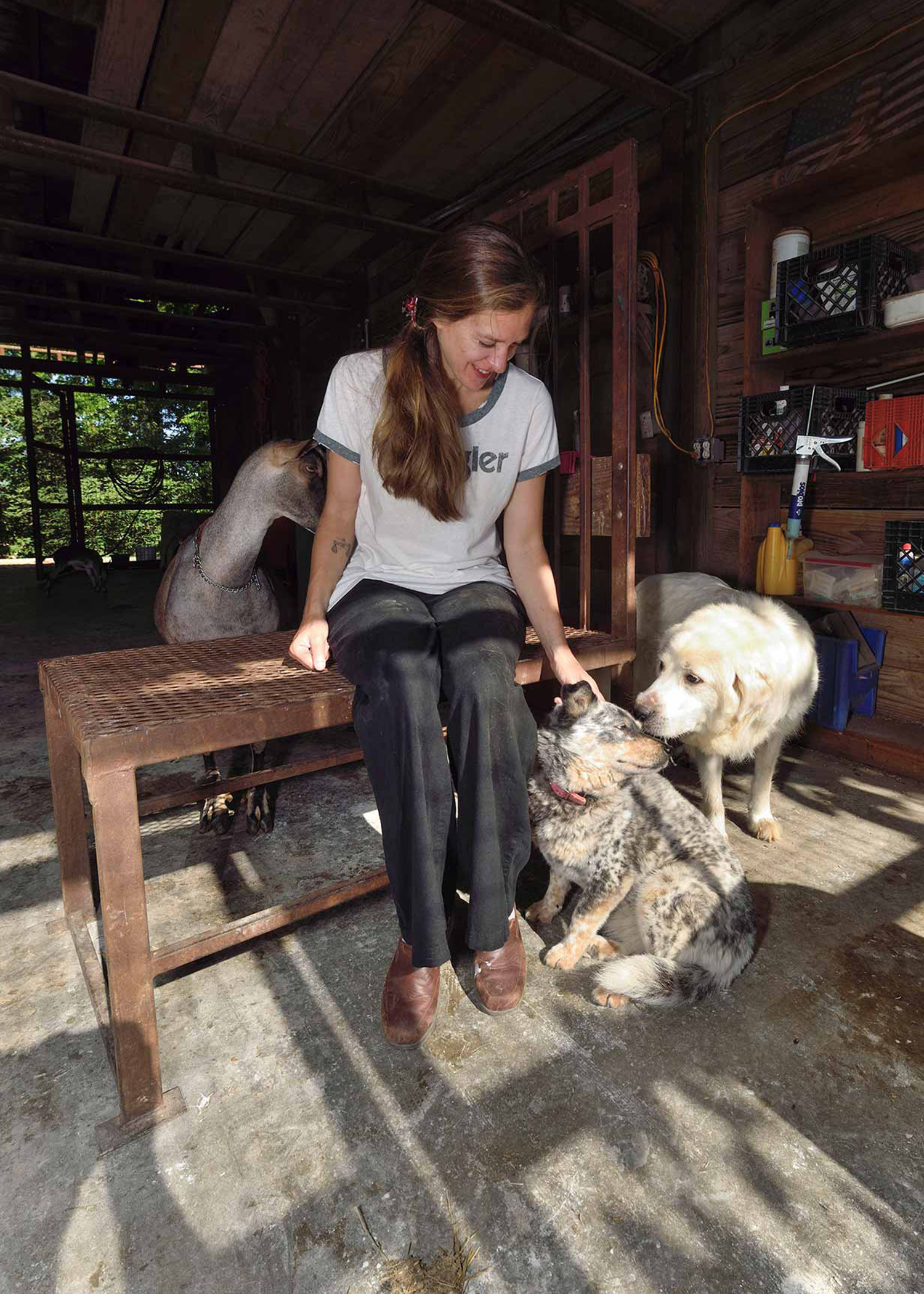 A woman with a white shirt, black pants, and brown shoes sits on a brown, metal bench inside a barn. On the right, there are two dogs. A light dog with black and brown spots sits next to the woman, white a white dog stands next to the dog sitting down. Behind the woman is a white and brown goat.
