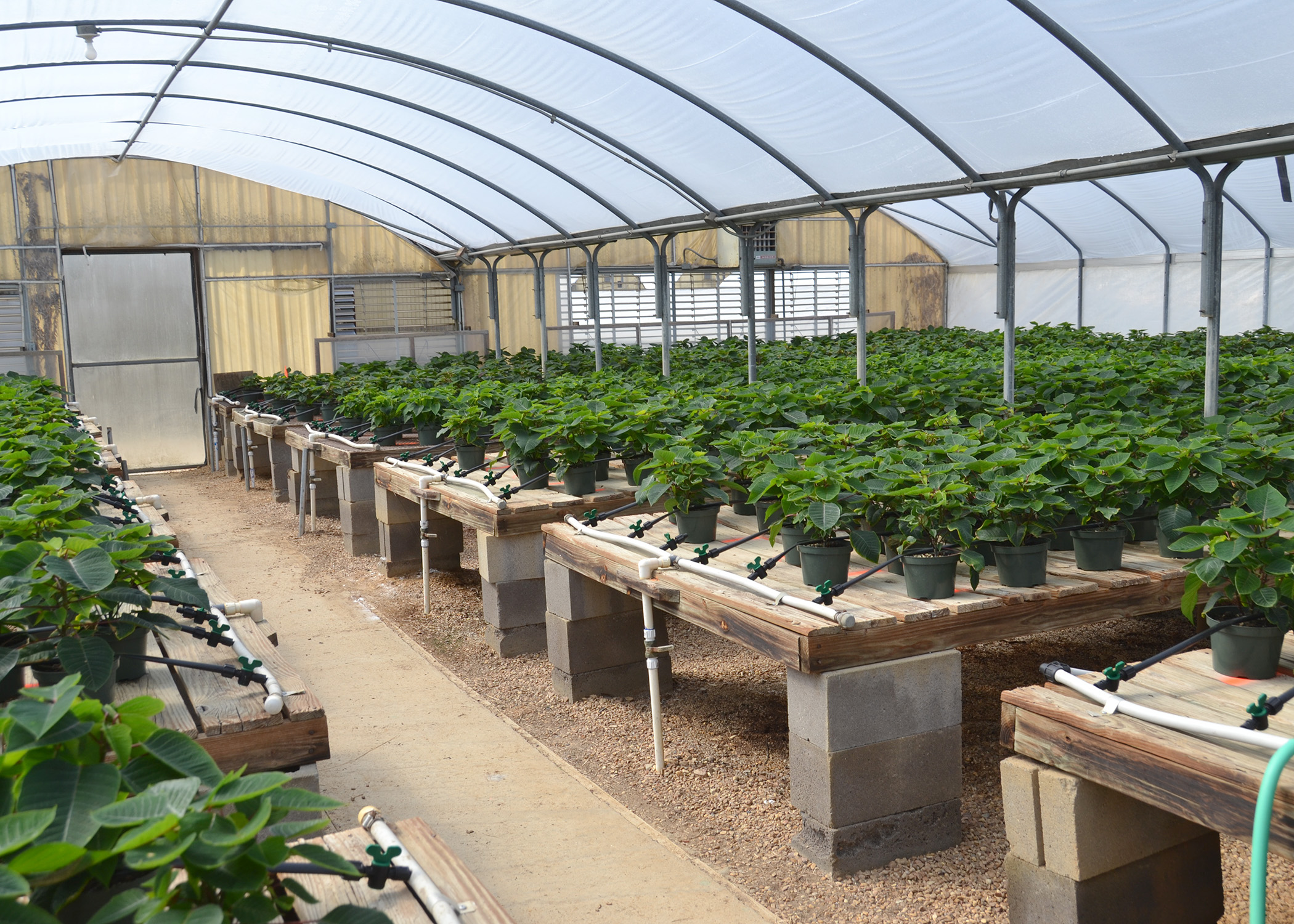 A Low Pressure Drip Irrigation System Won The Roval Of Standing Pine Nursery Owner