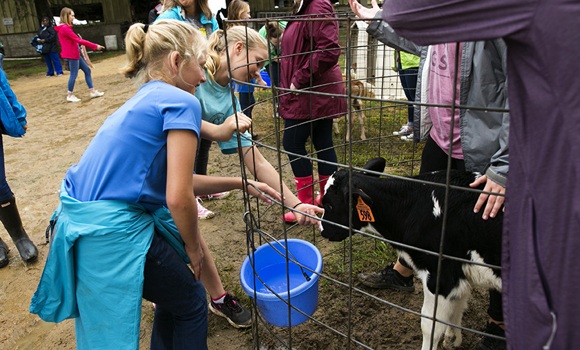 Two girls reach through an enclosure to pet a small black and white Holstein calf.