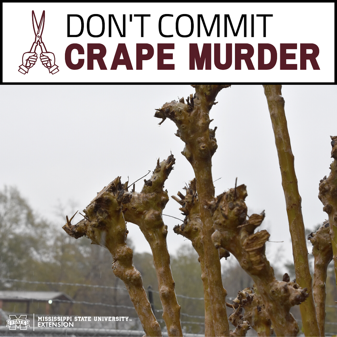 Don't Commit Crape Murder infographic.