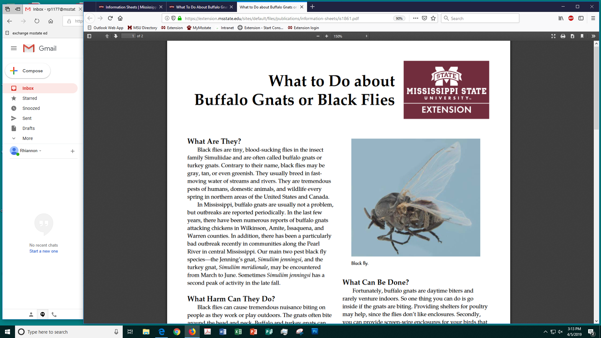 What To Do About Buffalo Gnats or Black Flies | Mississippi