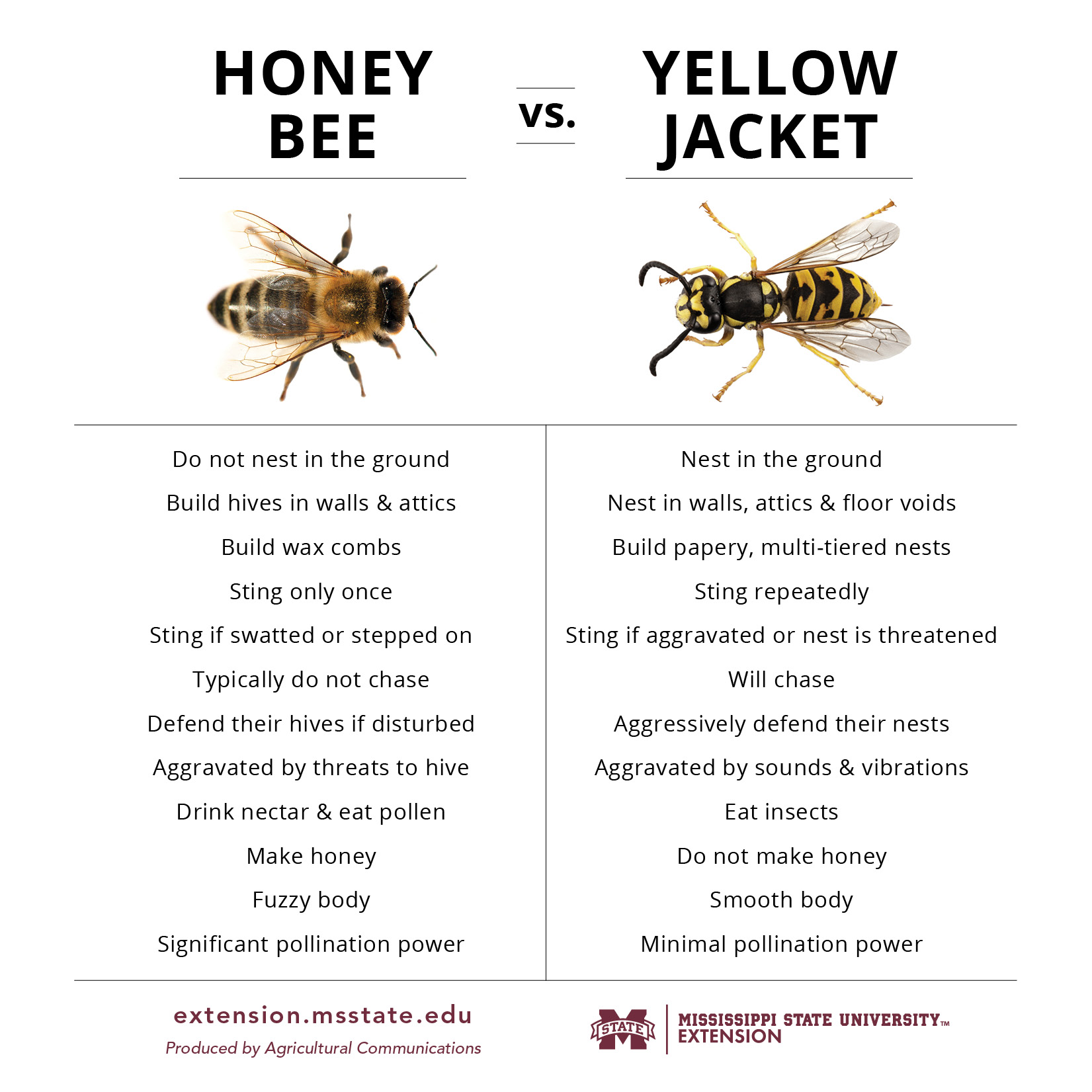 A chart of the differences between honey bees and yellow jackets.