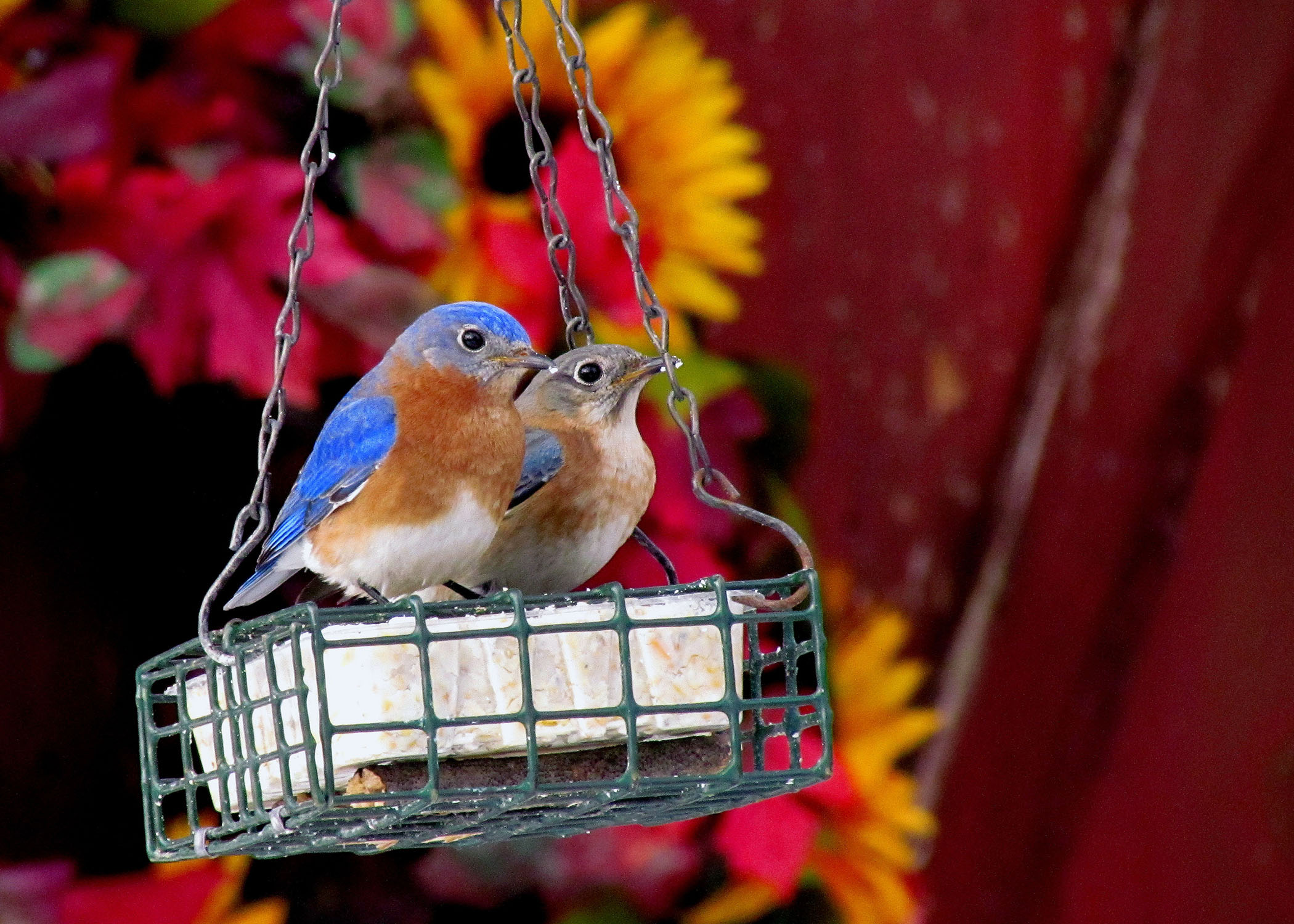 help wild birds stay warm this winter mississippi state