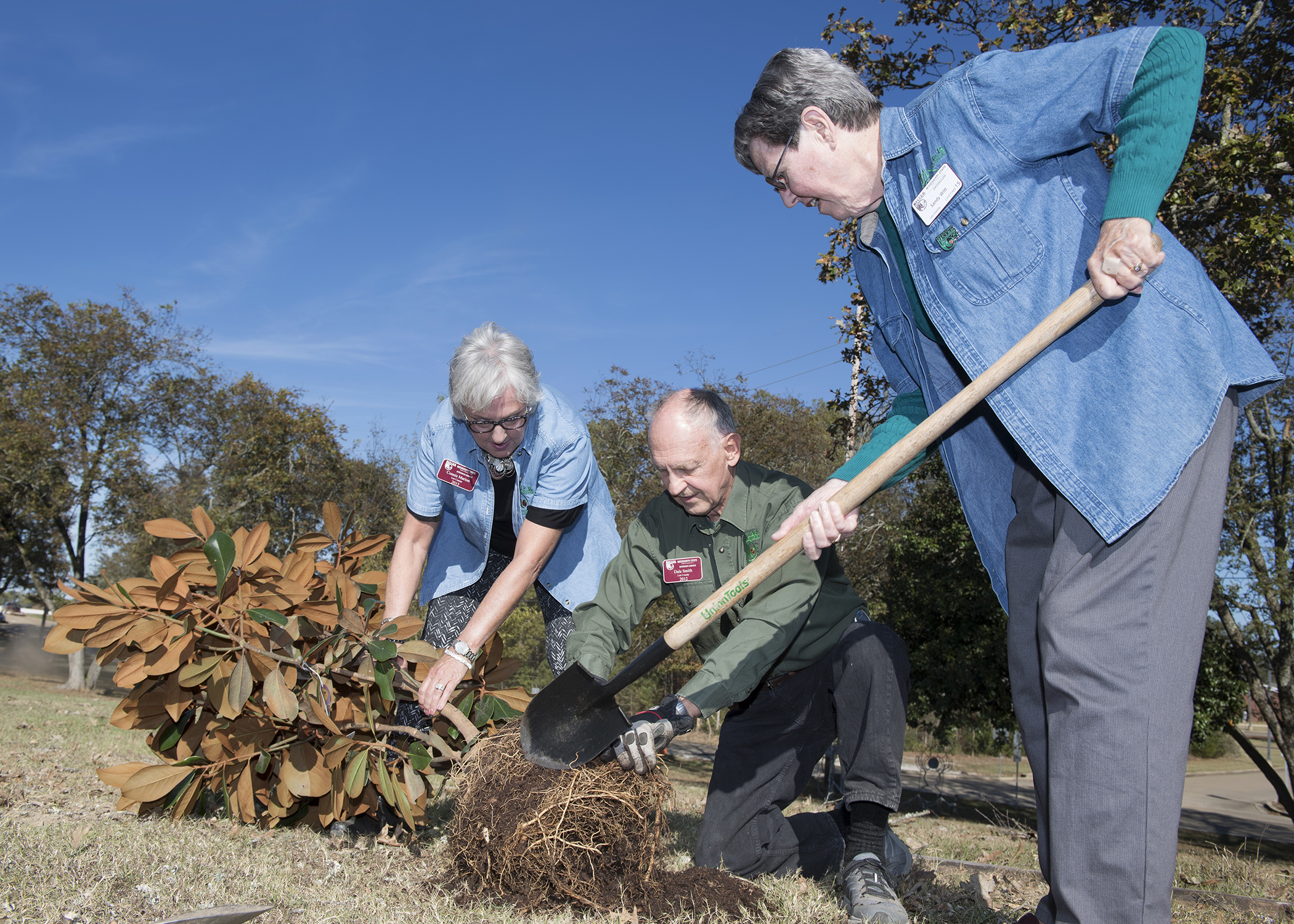 Three members of the Mississippi Master Gardners program pick up leaves and rake straw.