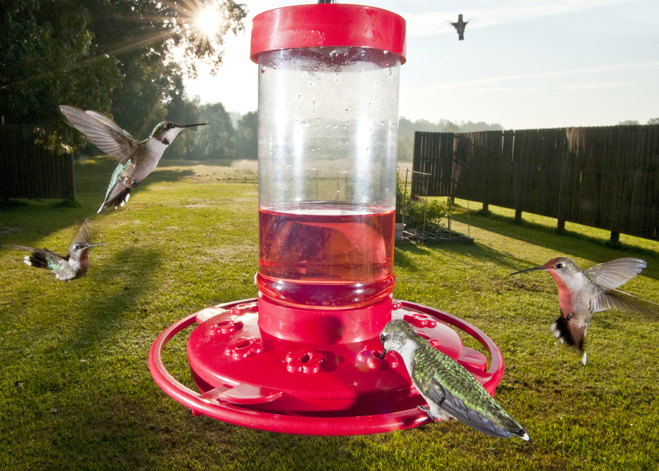 Hummingbird Feeders Attract Tiny Migrating Visitors To Mississippi Yards,  But Anyone Who Is Not Willing