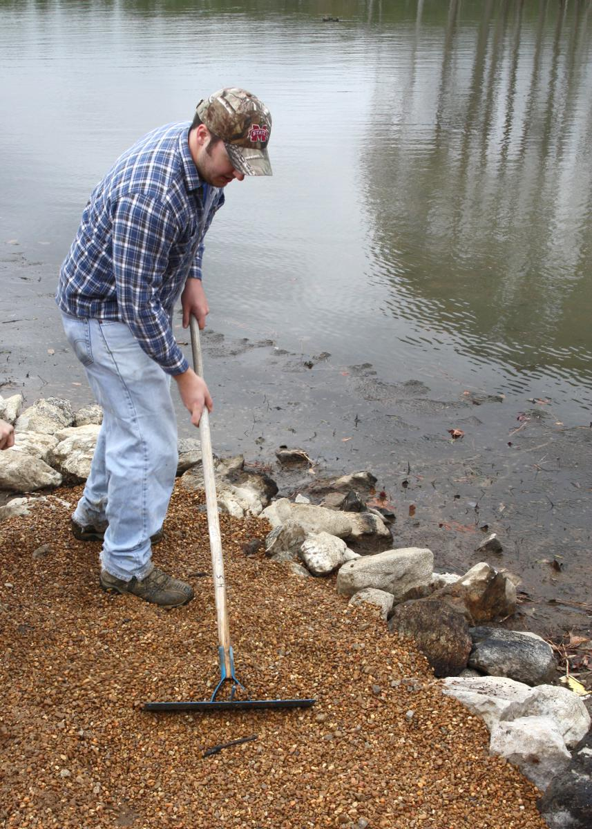 The easiest time to install pea gravel beds to attract spawning bream is when water levels are low. (Photo by MSU Extension Service/Wes Neal)