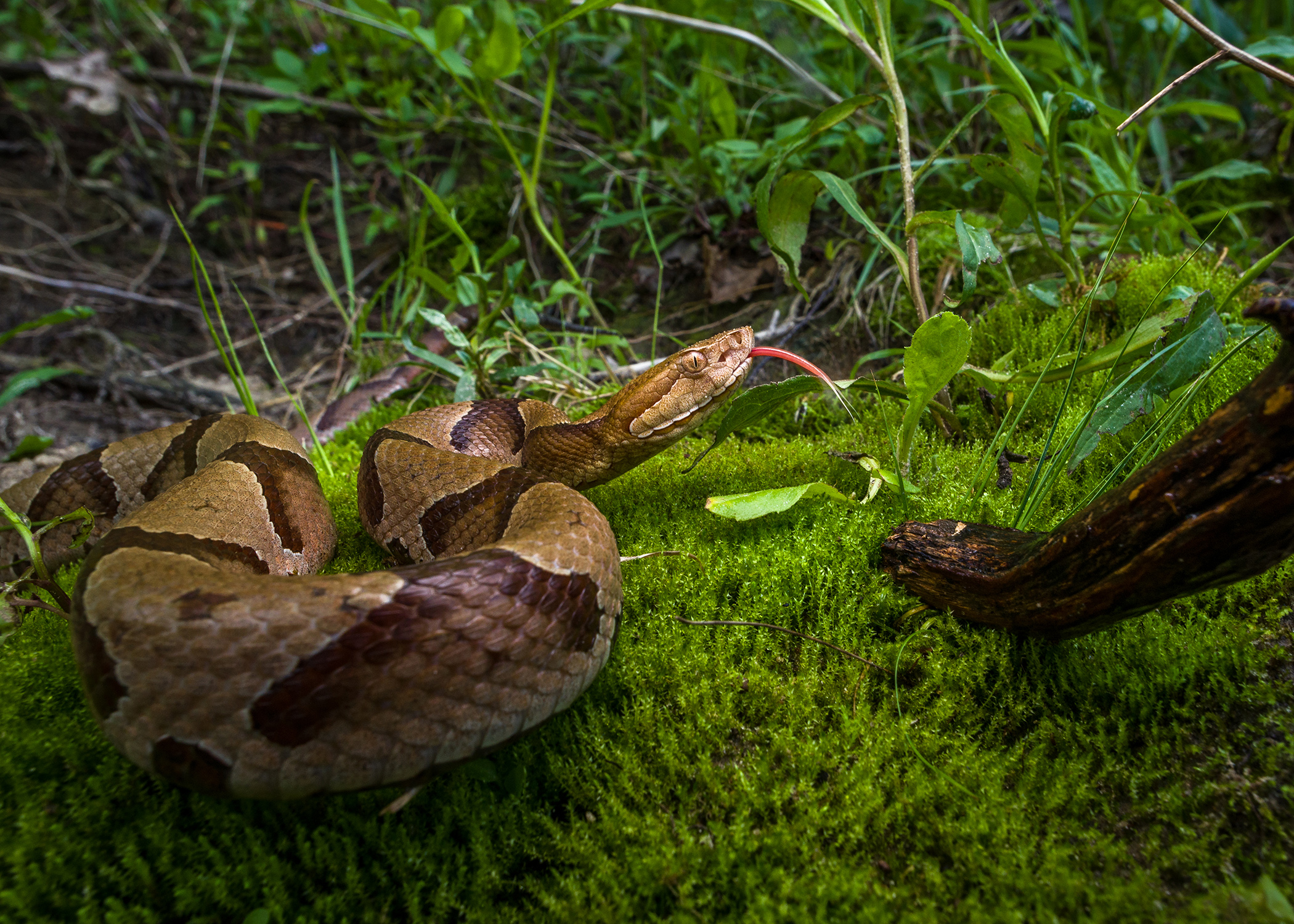 Snake encounters increase during summer months | Mississippi