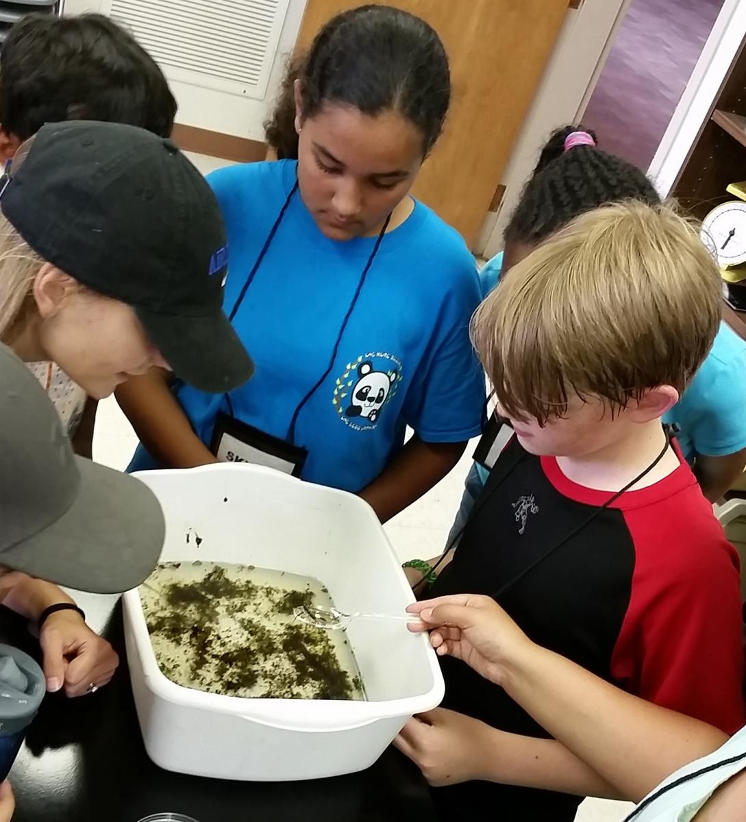 Young participants in a conservation camp at Mississippi State University in 2016 learn about water quality as they examine captured aquatic macroinvertebrates. (Submitted photo)