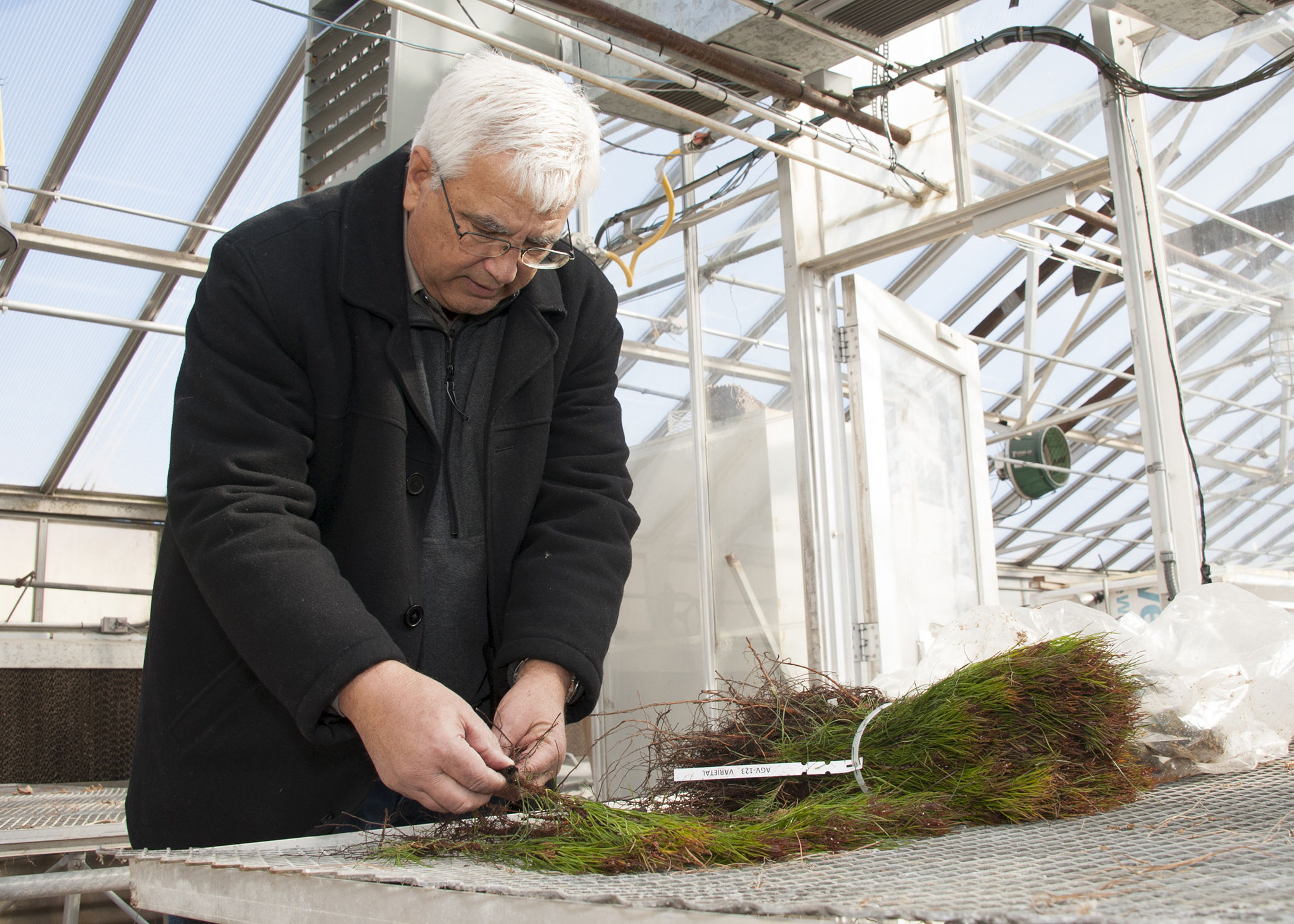 MSU forestry work shows the value of good seedlings