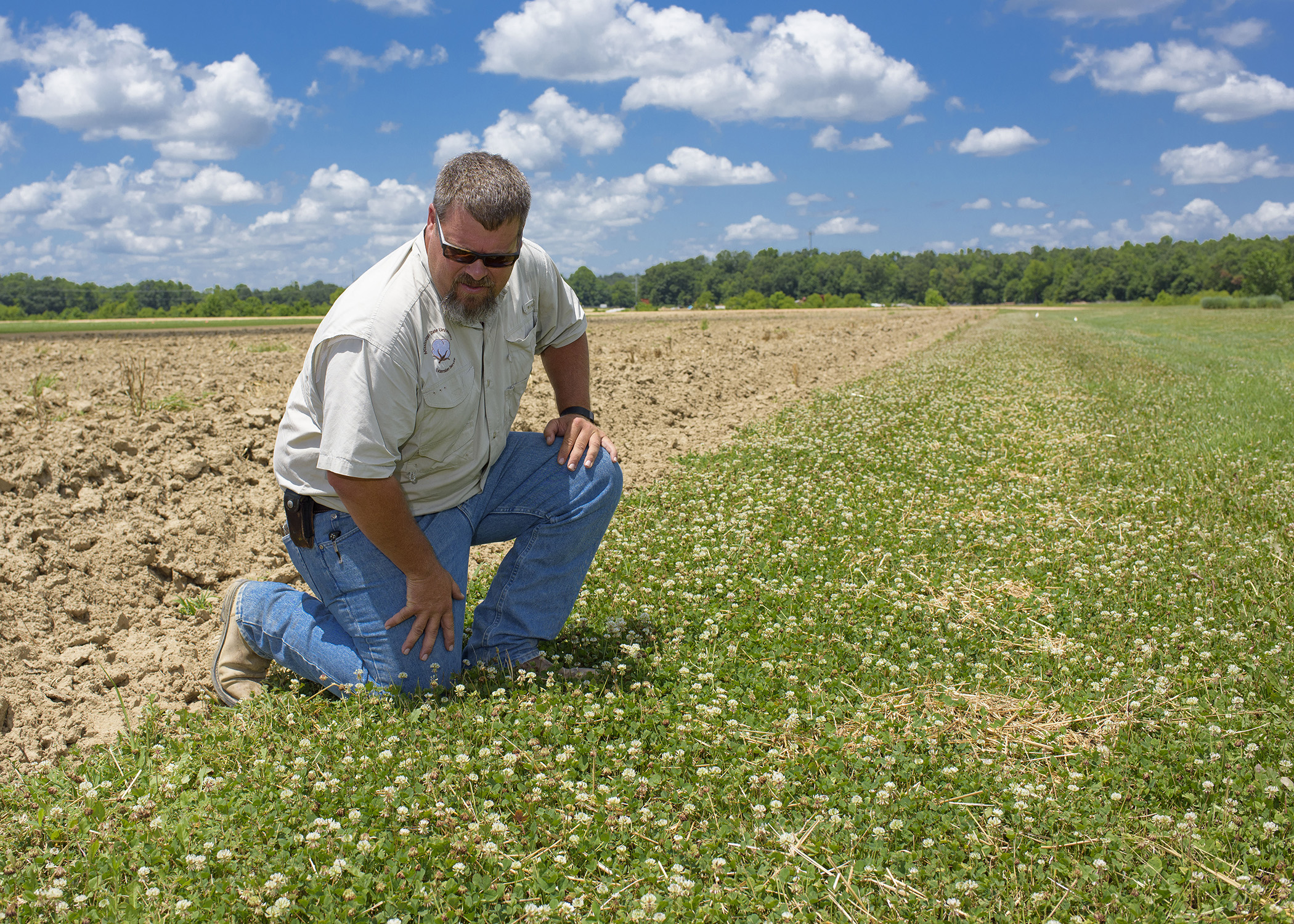 What looks like weeds to a farmer or landowner is forage for pollinators  such as honeybees