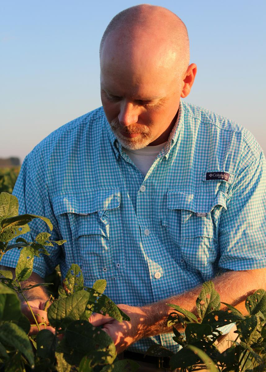 Soil moisture sensors let producers know when crops need irrigation. Jason Krutz, Mississippi State University Extension Service irrigation specialist, examines the development stage of these soybeans Sept. 7, 2016, at the Delta Research and Extension Center in Stoneville. (Photo by MSU DREC Communications/Kenner Patton)