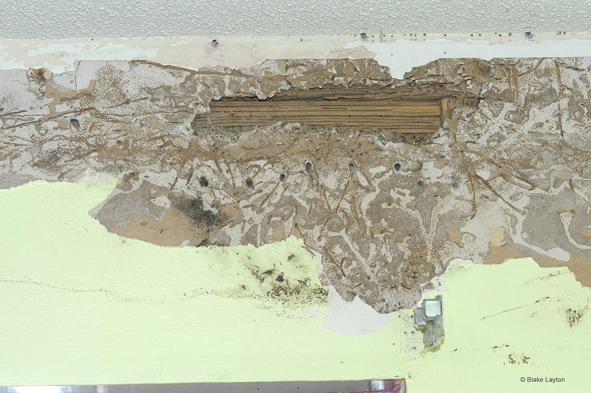 a termite damaged wall]