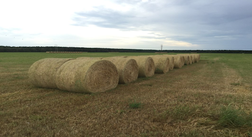 Rows of hay bales.