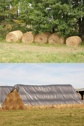 On top, 5 hay bales next to each other by a tree. On bottom, a pyramid of hay bales covered with a gray tarp.