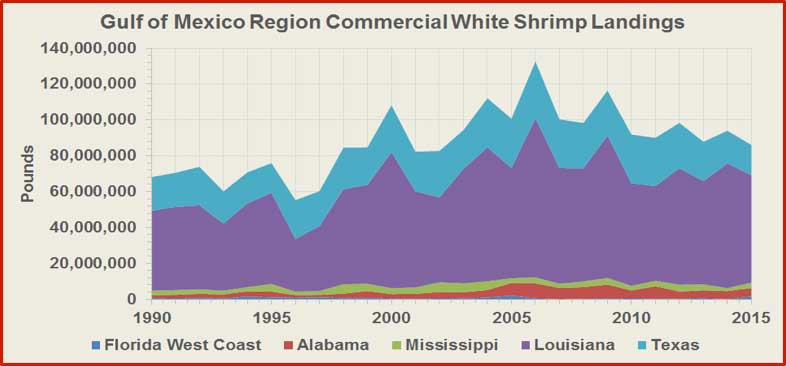 Figure 3 shows the commercial landings of white shrimp from the Gulf of Mexico Region since 1990. During the last five years, the Gulf States supplied 94.3% of the wild American white shrimp amounting to 91.3 million pounds and valued at $204.2 million per year. Louisiana is the largest producing state of wild American white shrimp in the Gulf of Mexico, followed by Texas, Alabama, Mississippi, and Florida.