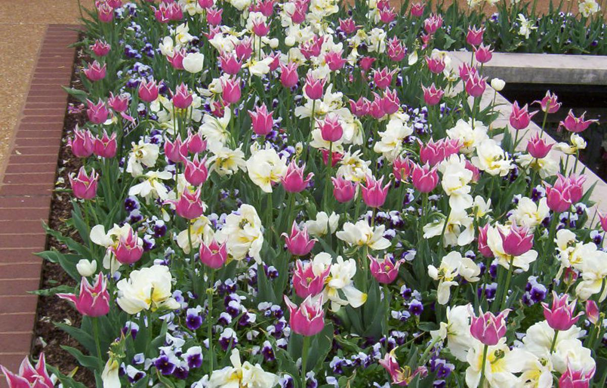 Example of interplanting of tulip and pansy. ocket science. Try new plants and designs. Moreover, most importantly, relax and have fun with your garden.