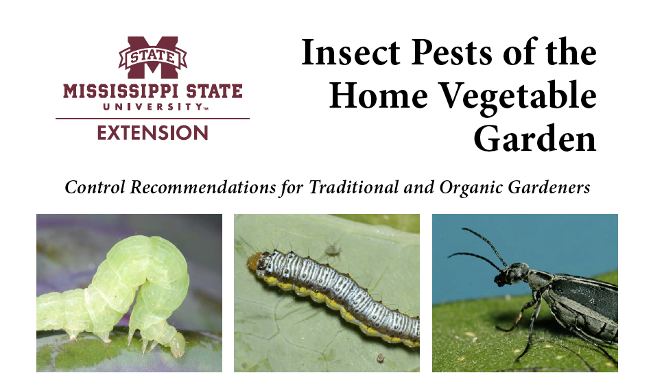 Insect Pests of the Home Vegetable Garden   Mississippi