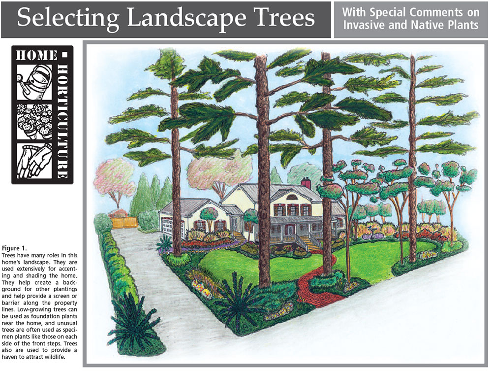 Selecting Landscape Trees With Special Comments on Invasive ... on crawford home plans, stanley home plans, alexander home plans, garrison home plans, marshall home plans, liberty home plans, hall home plans, gardner home plans, washington home plans, thomas home plans, hill home plans, harris home plans, friendship home plans, stewart home plans, coleman home plans, wayne home plans, ashland home plans, hudson home plans, franklin home plans,