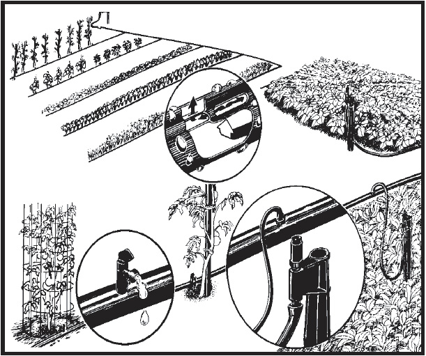A drip irrigation system