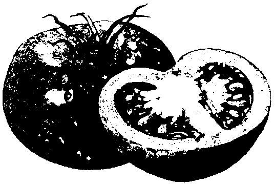 Para mejores tomates, no hay lugar como el hogar - The San Diego Union-Tribune