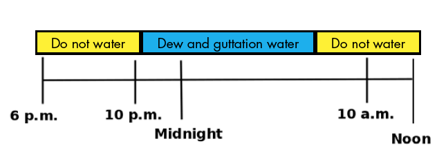 This is an irrigation scheduling chart. You should not water from 6 p.m. to 10 p.m. and 10 a.m. to noon. It is best to water the plants when dew is already on the leaves.