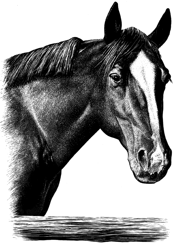 Drawing of a horse's head.