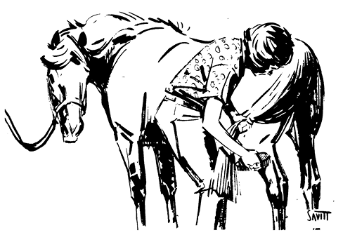 Illustration of a girl and a horse. The girl is grooming the horse, starting at the back. She is holding the horse's tail and brushing its leg. The horse is tied up and has its head turned toward the girl.