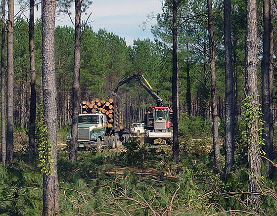 image of log truck being loaded with chip-n-saw logs as part of a second thinning in a pine plantation.