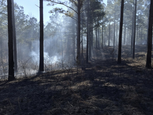 A forest with burned vegetation on the ground and smoke in the distance.