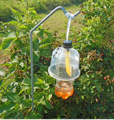 A simple trap made of a 2-liter bottle, a piece of plastic, and a liquid hanging from a metal pole.