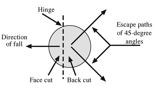 Escape paths are established based on the direction of the fall, face cut, back cut, and hinge. From a bird's-eye view, the diagram shows that two escape paths should be established at 45 degree angles from the hinge and on the opposite side of the tree from the face cut and direction of fall to ensure safety.