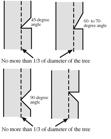 Four diagrams of side views on trees show the different angles of wedges for face cuts. For each angle (45-degree, 60- to -70-degree, 90-degree, and an inverse 45-degree angle), the face cut should not be more than 1/3 of the diameter of the tree.