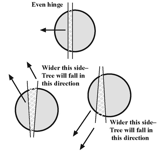 Three different types of hinges are show from a bird's-eye view of a trunk. One hinge is called an even hinge, and the hinge cutings are parallel. The remaining two hinges both have hinge two cuts which are not parallel. When the hinge is cut so that the space between the cuts is wider on one side of the tree than the other, the tree will fall in the direction of the wider-sized cut.