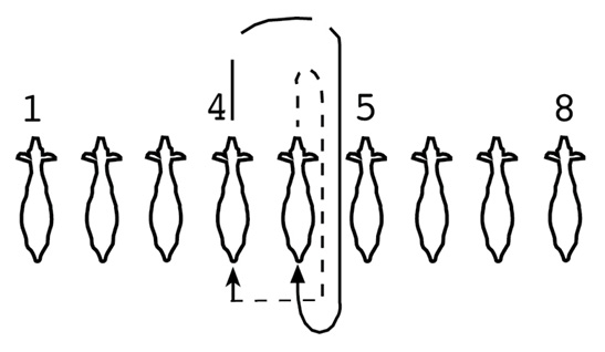 A diagram of how to switch two goats from positions 4 and 5. Beginning with position 5, the showman would move forward, turn right and walk through position 5, then turn right again and move into position 4. After position 5 begins to move, position 4 follows. The position 4 showman should move forward, turn right, move through position 5, turn right again, and turn into position 5.