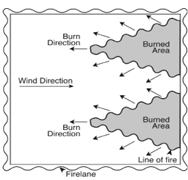 Diagram for flank fire prescribed burning technique, where smaller fires are set apart from each other, against the direction of the wind.