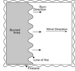Diagram for head fire prescribed burning technique, where burning direction is the same direction as the wind.