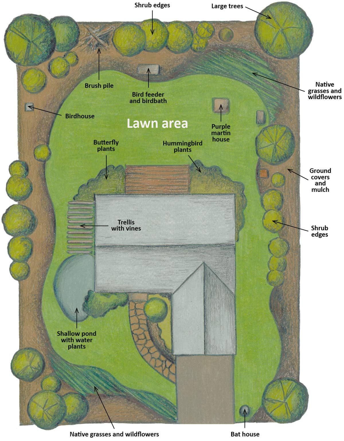 Drawing of an example of a backyard habitat.