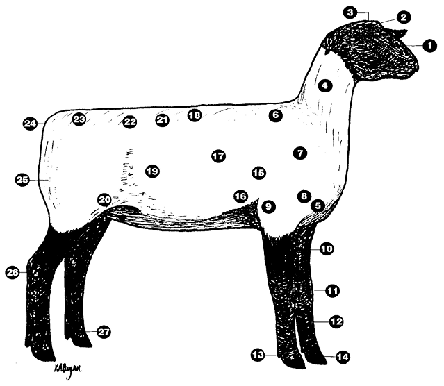Lamb diagram with parts labeled. Parts are listed in text.