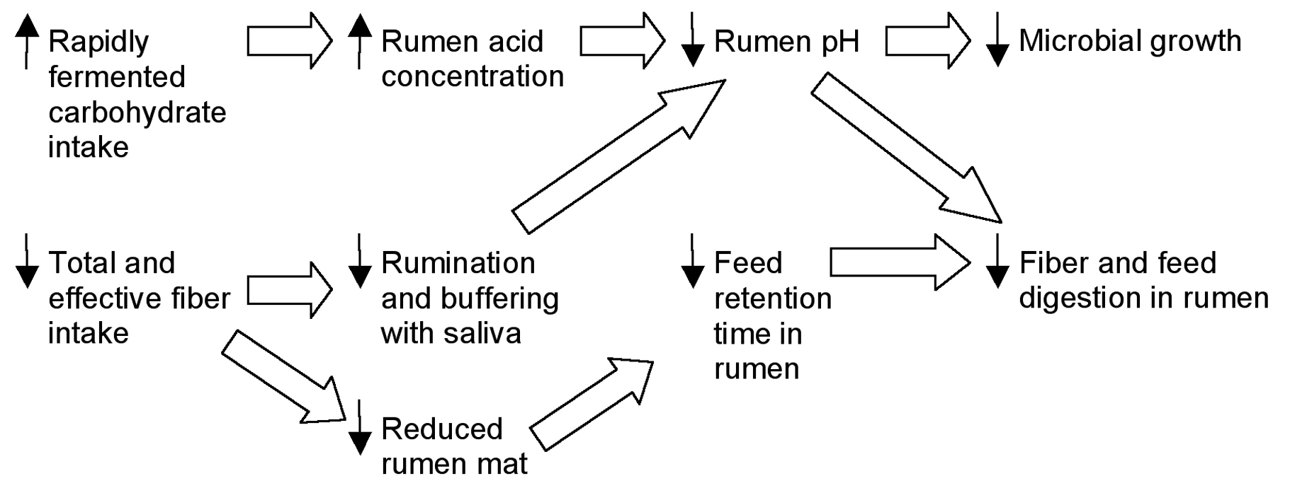 Rumen changes in response to decreased fiber intake (Adapted from Trenkle, 2002).