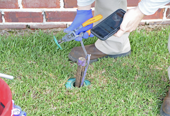 A person stands in the grass next to a brick building. The person is holding a smartphone and a tool that is connected to a bait station coming out of the ground.