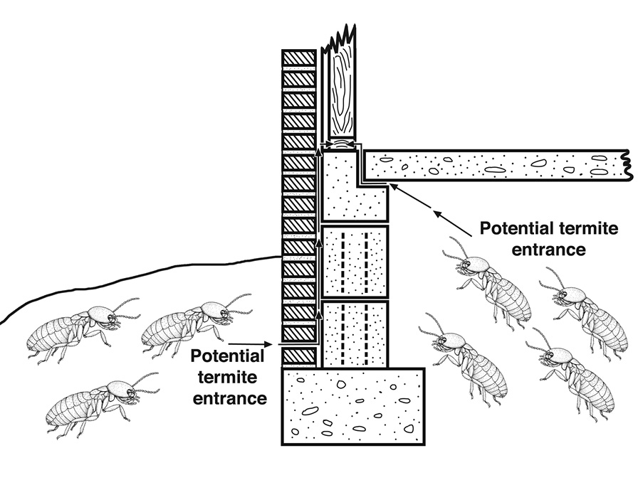 Illustration showing that termites can enter buildings through the surrounding soil.