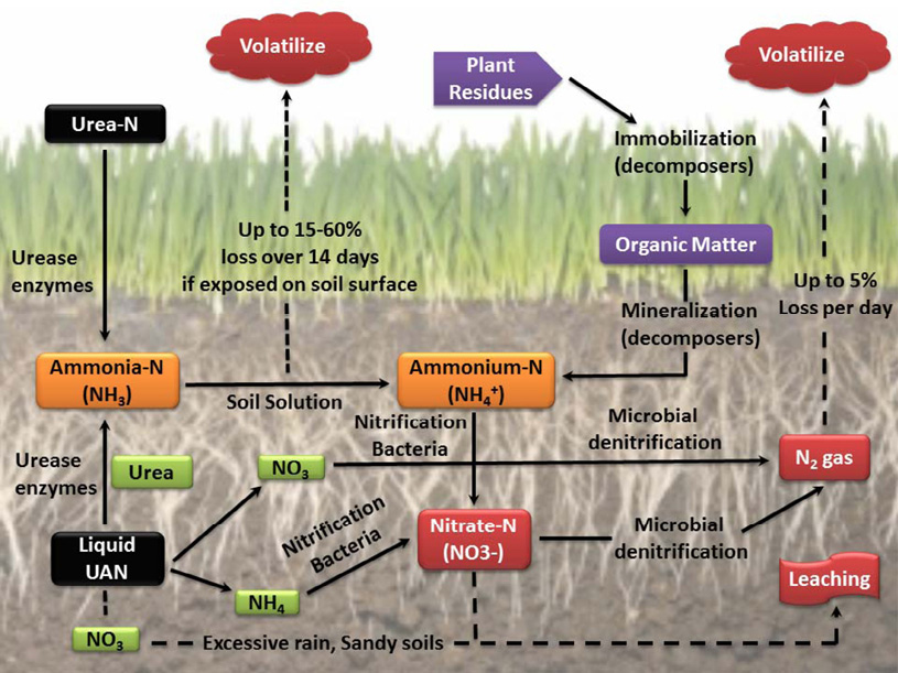 Nitrogen cycle diagram. Description in text.