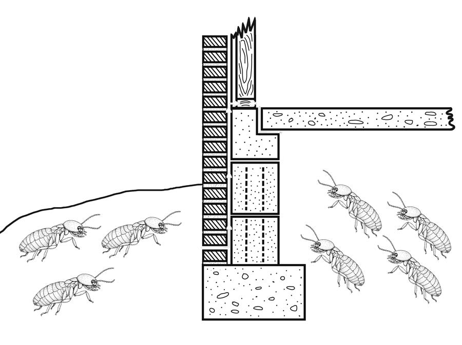 Termites are infesting a home in this drawing.