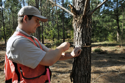 A person uses a flexible tape measure to measure around a pine tree trunk in a forest.