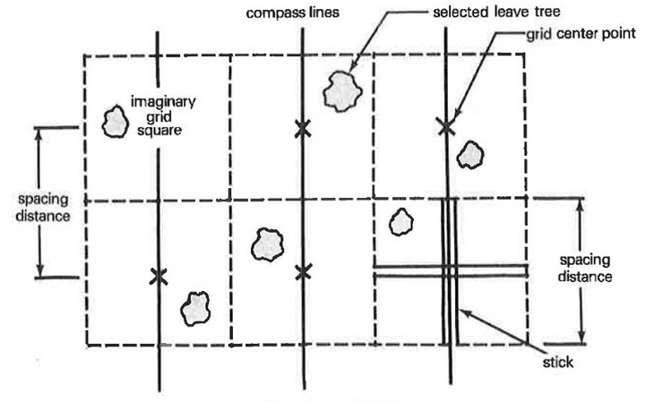 Diagram showing a leave-tree spacing grid. It shows compass lines, grid center points, and selected leave trees within each grid square.