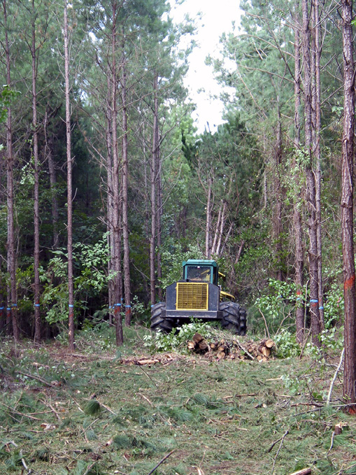 A tractor cuts down rows of trees. Trees with blue paint marks are left standing.