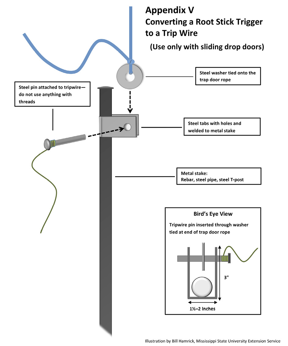 Appendix V. Converting a root stick trigger to a trip wire (use only with sliding drop doors). Weld steel tabs with holes to a metal stake (rebar, steel pipe, or steel T-post). Attach a steel washer to the trap door rope and a steel pin to the tripwire. Insert the tripwire pin through the washer.