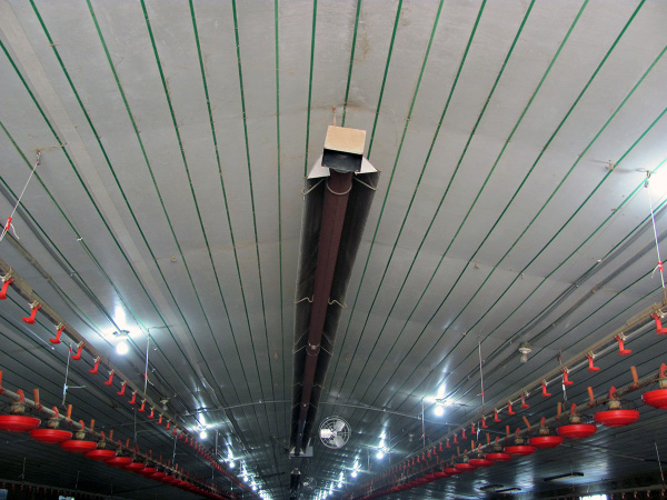 A tube heater hangs from the center of the broiler house roof.