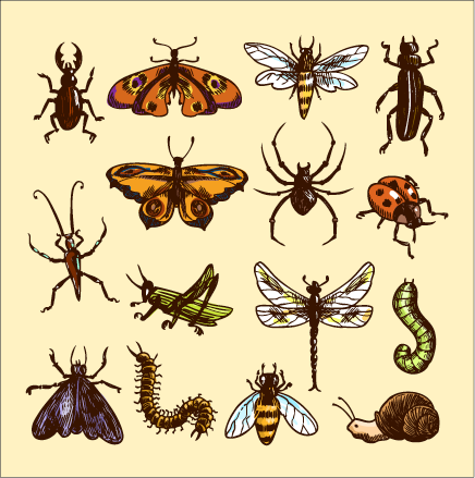 This is drawings of many different insects.