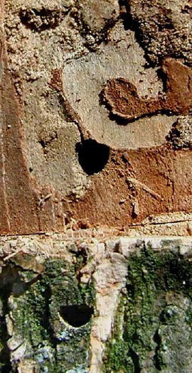 This is an image of EAB exit holes.